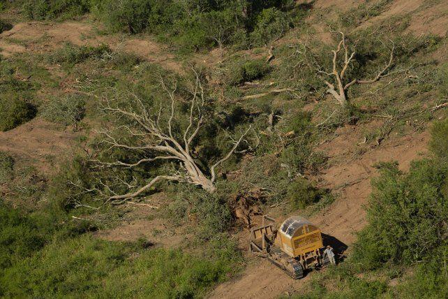 Argentina sigue en el ranking de los 10 países que más destruyen sus bosques