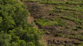 argentina sigue en el ranking de los 10 paises que mas destruyen sus bosques