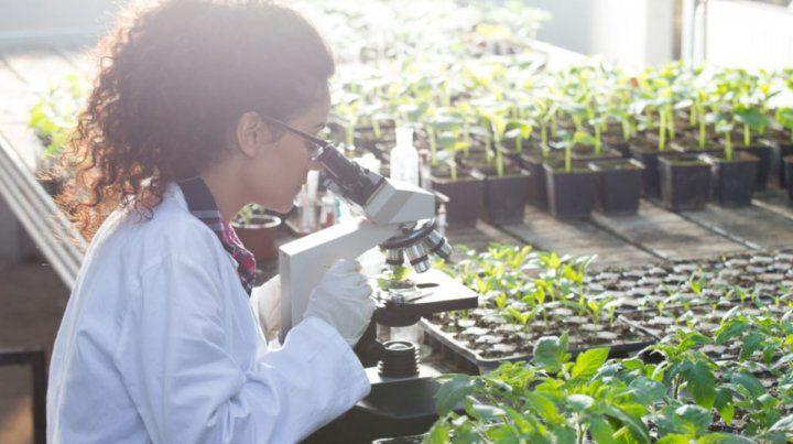 La Biotecnología está dentro de la Economía del Conocimiento.