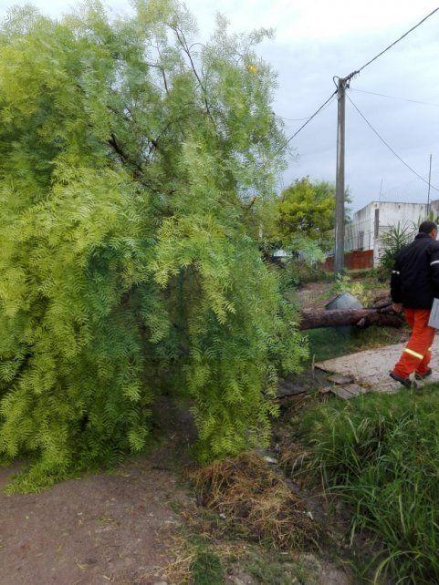 Por el temporal hubo árboles caídos, cables cortados y cinco familias asistidas