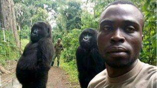 El guardabosque Mathieu Shamavu posa con dos gorilas y un compañero. (Facebook Mathieu Shamavu)