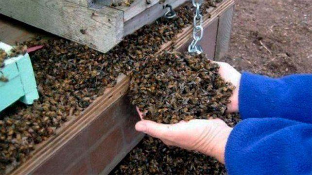 Un pesticida mató a las 70 millones de abejas en Traslasierra