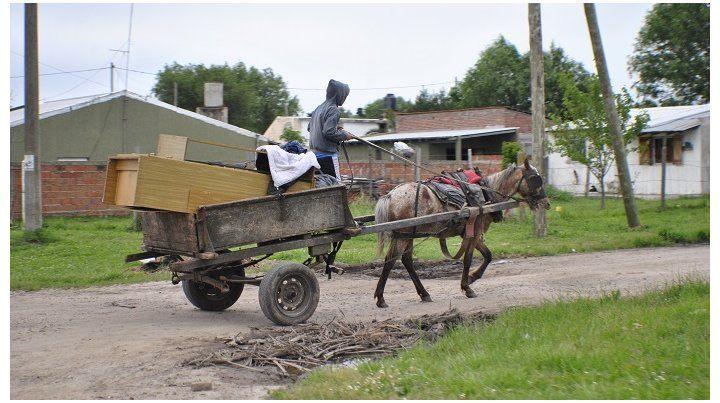 Identifican los carros y a los caballos les colocan un chip de control