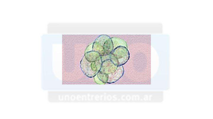 El inicio. Así se ve un embrión de ocho células