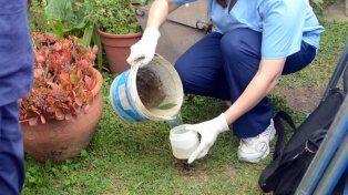 Recalcan la necesidad de combatir el mosquito vector con limpiezas, desmalezados y descacharrización.