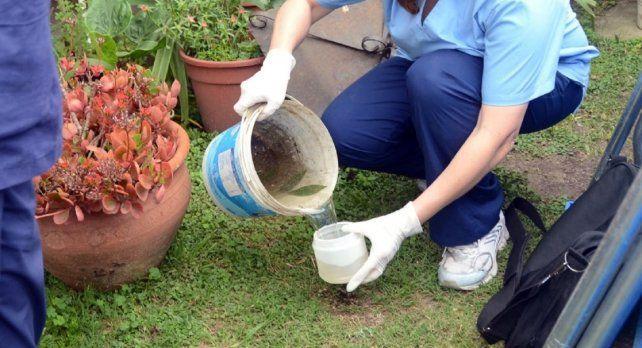 Recalcan la necesidad de combatir el mosquito vector con limpiezas
