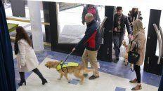 perros guia para ciegos, una herramienta que cobra cada vez mas valor