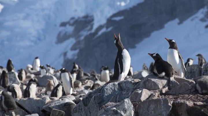 Contaminación: el sábado 8 es el Día Mundial de los Océanos