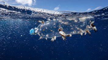 El plástico es una gran amenaza.