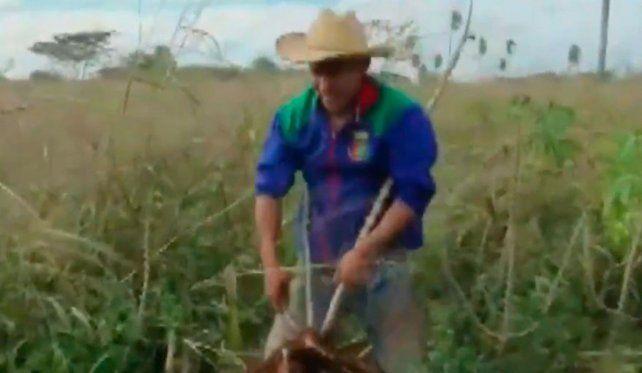 Un futbolista de River trabaja en vacaciones en la cosecha de mandioca