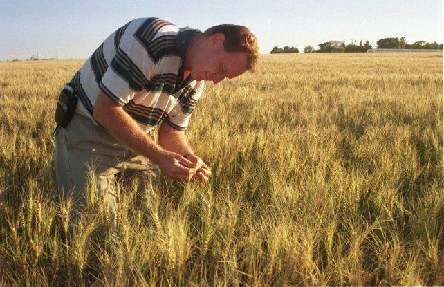 Hay un plan para estimular la siembra de más hectáreas de trigo en la región