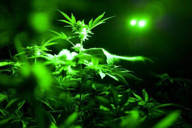 Descubren evidencias de uso de marihuana en la antigüedad