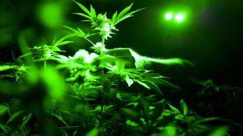 hace 2.500 anos ya se fumaba marihuana