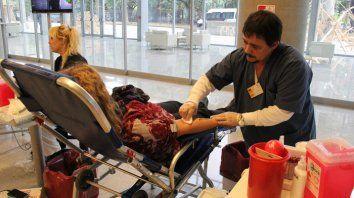 en el dia del donante de sangre hay camion sanitario en plaza mansilla