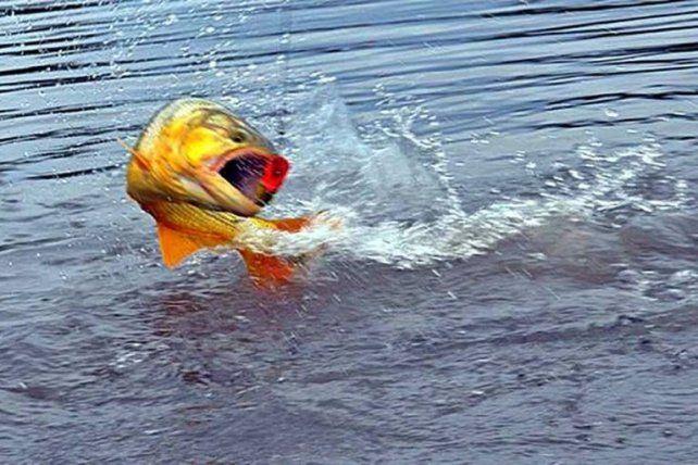Detectan restos de 16 medicamentos en peces del río Uruguay