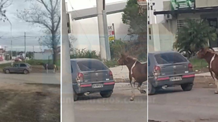 Maltrato animal: Así llevaban un caballo en avenida Zanni y Larralde, en Paraná