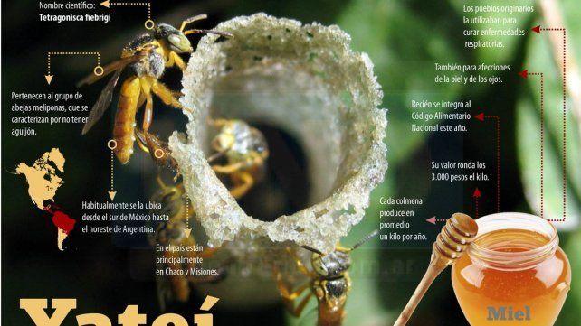 Hallaron en la zona una abeja foránea cuya miel tiene importantes virtudes medicinales