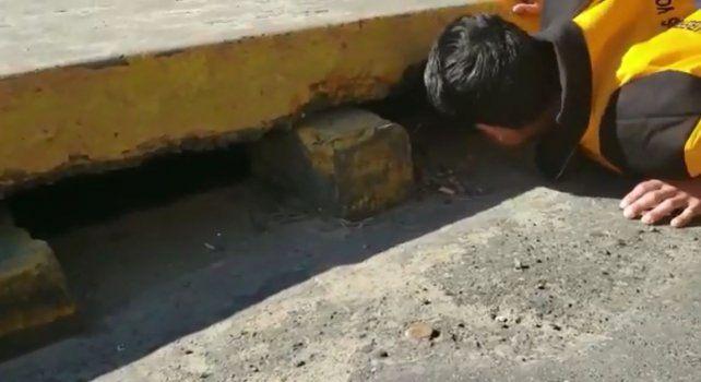 Arrojaron un gatito vivo en un desagüe en pleno centro de Paraná