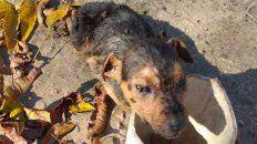 tres perros muertos y cinco en pesimo estado en el patio de una casa
