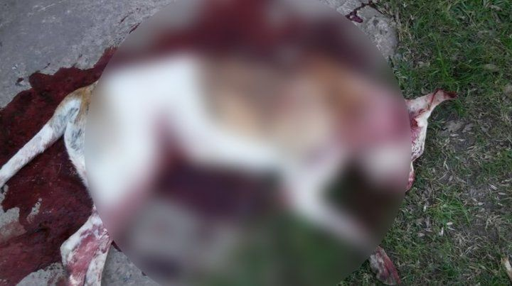 Mató a machetazos a un pitbull que ingresó a la casa y atacó a su perro