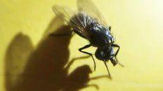 espanta la mosca que juega con su propia cabeza decapitada