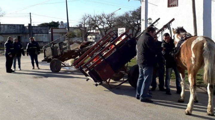 Censan caballos y carros en barrios de Concepción
