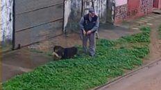 Ataque. El perro cayó sobre el gato que estaba maniatado por la trampa.