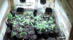 Iluminadas. En el vivero había un sistema de lámparas para provocar el crecimiento de las plantas.