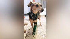 fabrica protesis para mascotas amputadas con una impresora 3d