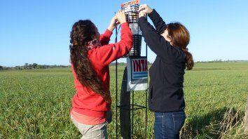 Las investigadoras trabajando en el campo.