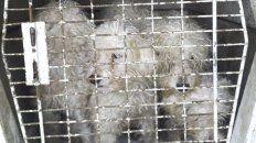 salud animal participo en el rescate de 15 perros en cautiverio