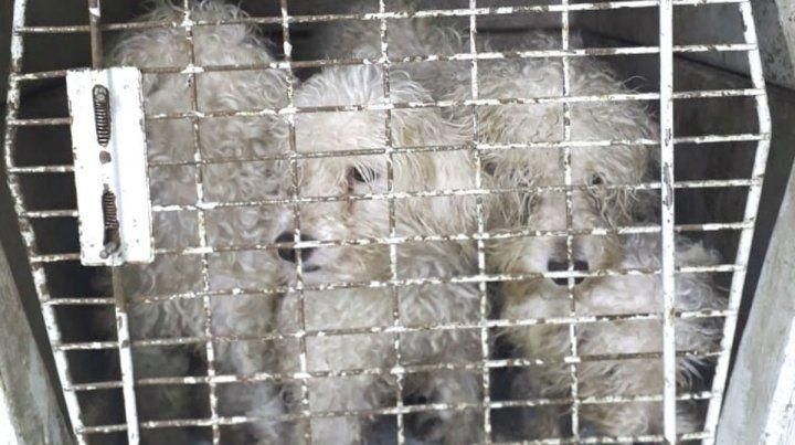 Salud Animal participó en el rescate de 15 perros en cautiverio