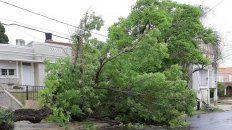 Un árbol cayó por el viento y arrastró el cableado