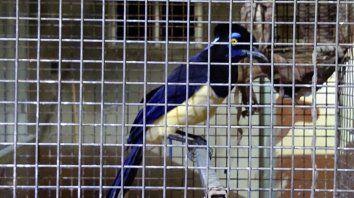 secuestran gran cantidad de aves autoctonas en cautiverio