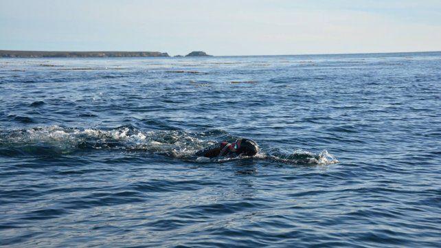 El concordiense que unió a nado las Islas Malvinas