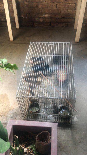 Detenido por la caza de animales en extinción