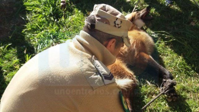 Por primera vez en Entre Ríos liberaron un aguará guazú
