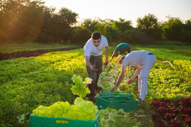 Producción hortícola de Paraná se venderá a un hipermercado
