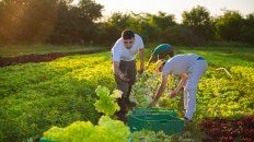 produccion horticola de parana se vendera a un hipermercado