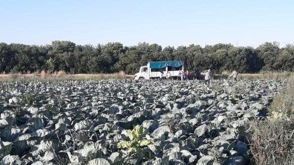 Horticultores de Paraná comenzaron a vender su producción en Buenos Aires