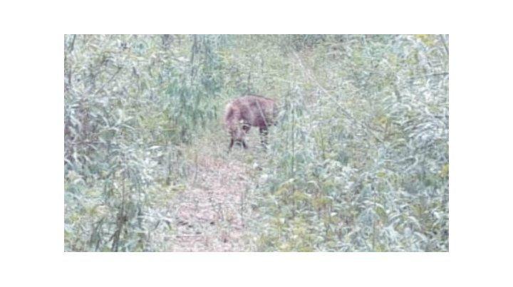 Fue liberado en su hábitat el zorro encontrado en el centro