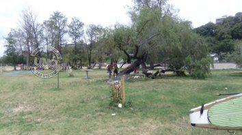hicieron fuego en lugar no habilitado y con las ramas de un arbol del parque