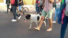 organizaron falsa marcha para llevar a un perro al veterinario
