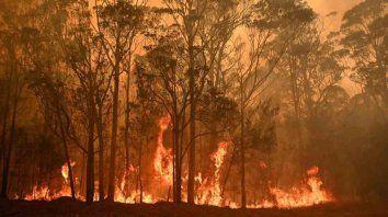 la devastacion de los incendios en australia, en numeros e imagenes