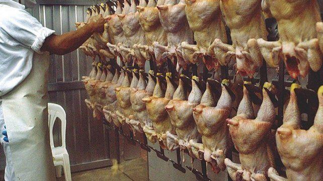 frigorifico-avicola-pollo-2jpg